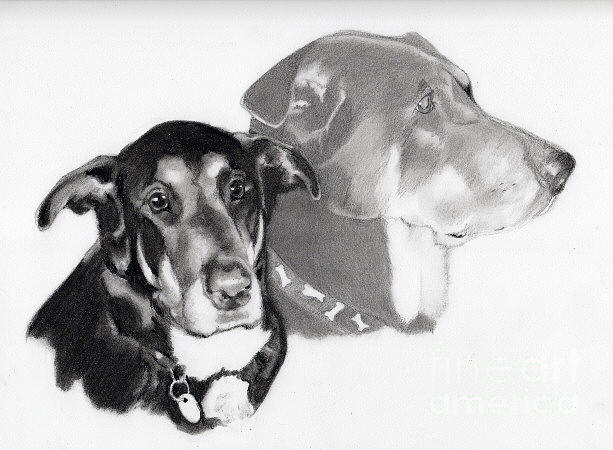 Animals Drawing - Commission1 by Wanda Edwards