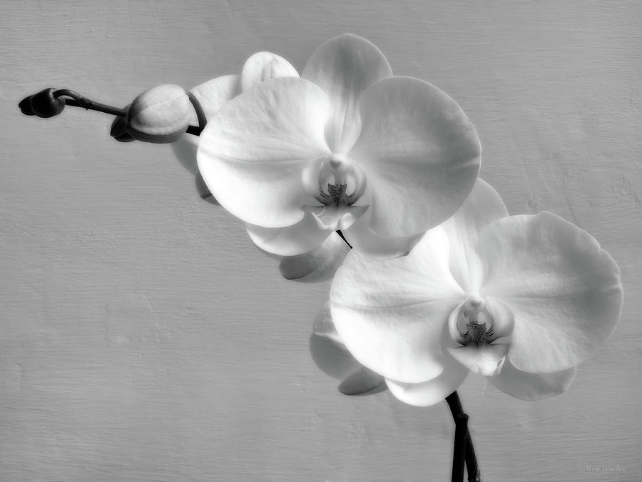 White Orchid Photograph - Commitment by Wim Lanclus