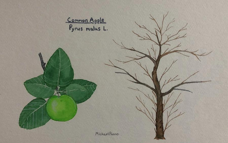 Nature Painting - Common Apple Tree Id by Michael Panno