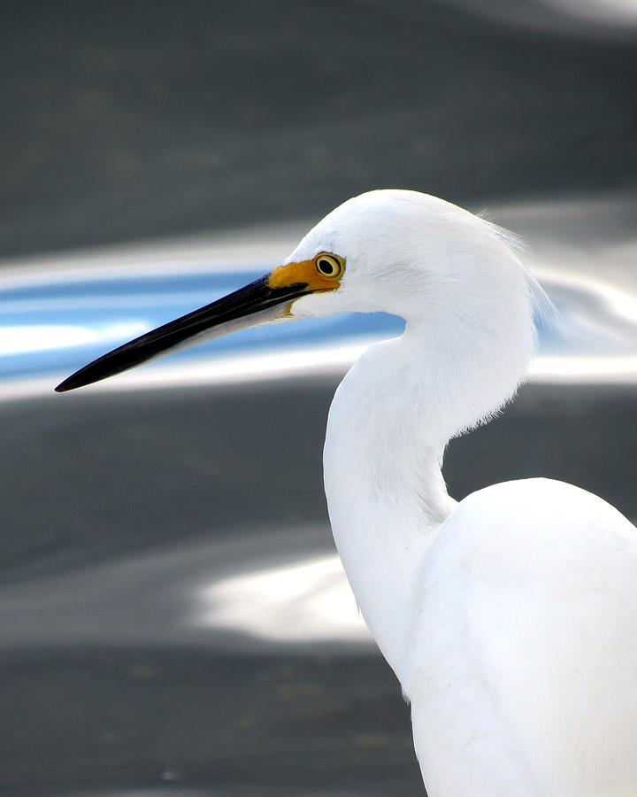 Common Egret Abstract 1 by Bart Blumberg