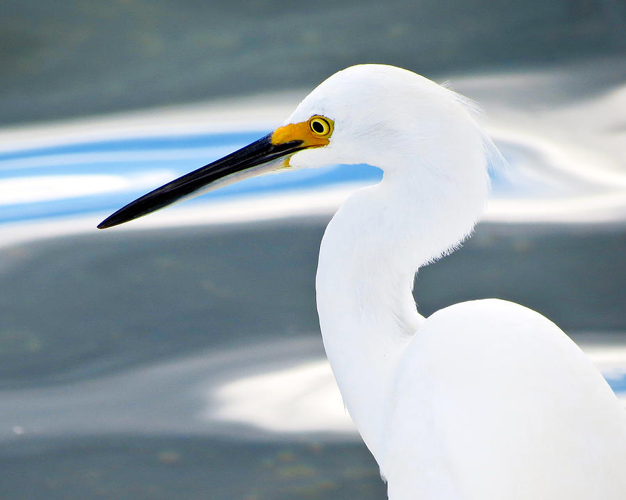 Common Egret Abstract 2 by Bart Blumberg