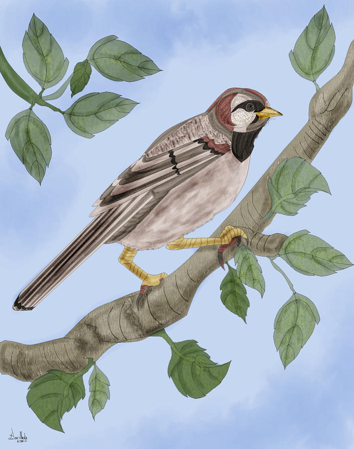 Sparrow Painting - Common House Sparrow by Anne Norskog