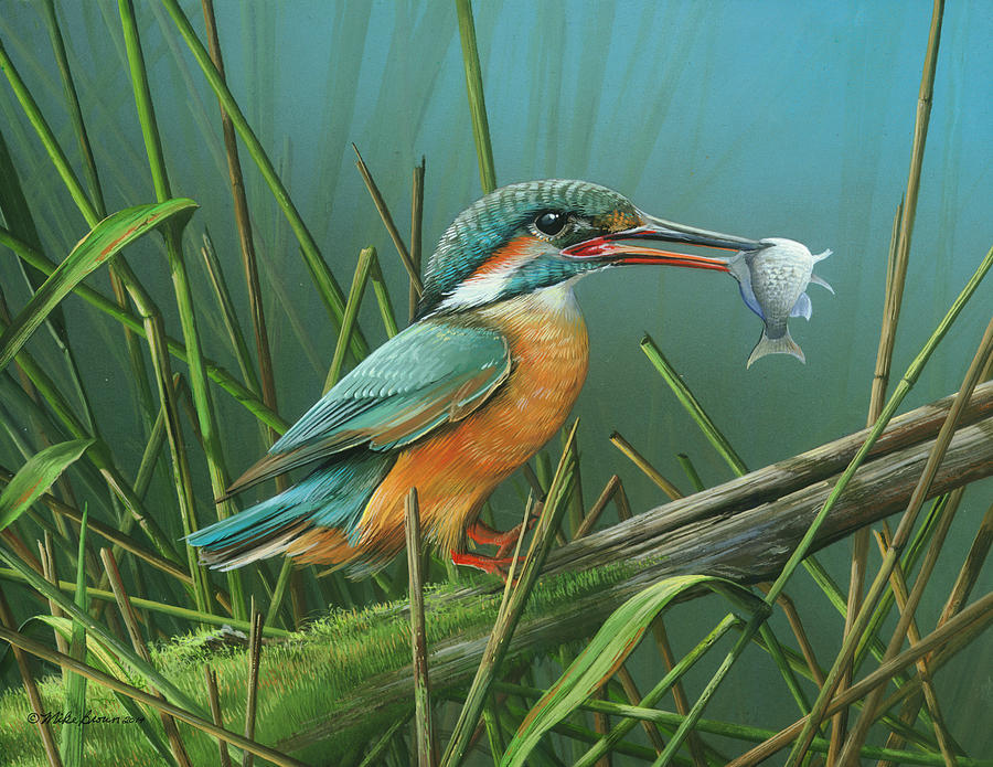 Common Kingfisher Painting - Common Kingfisher by Mike Brown