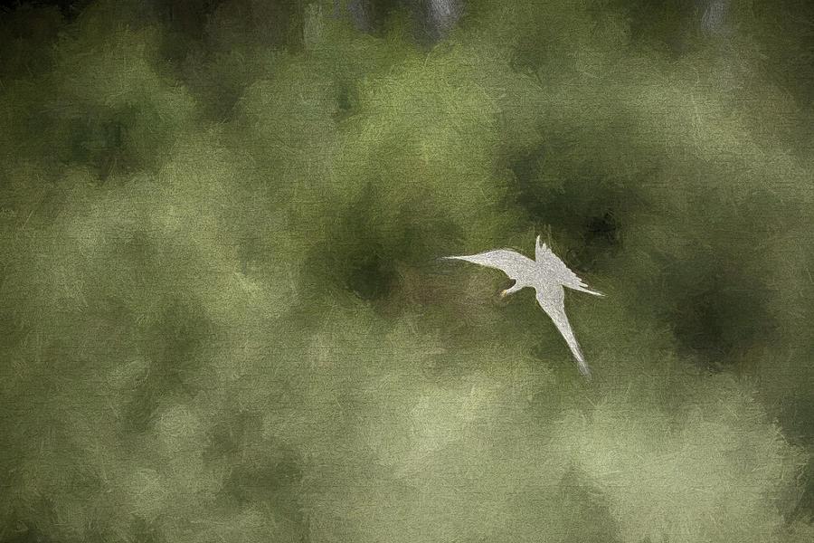 Common Tern - Creative Photograph
