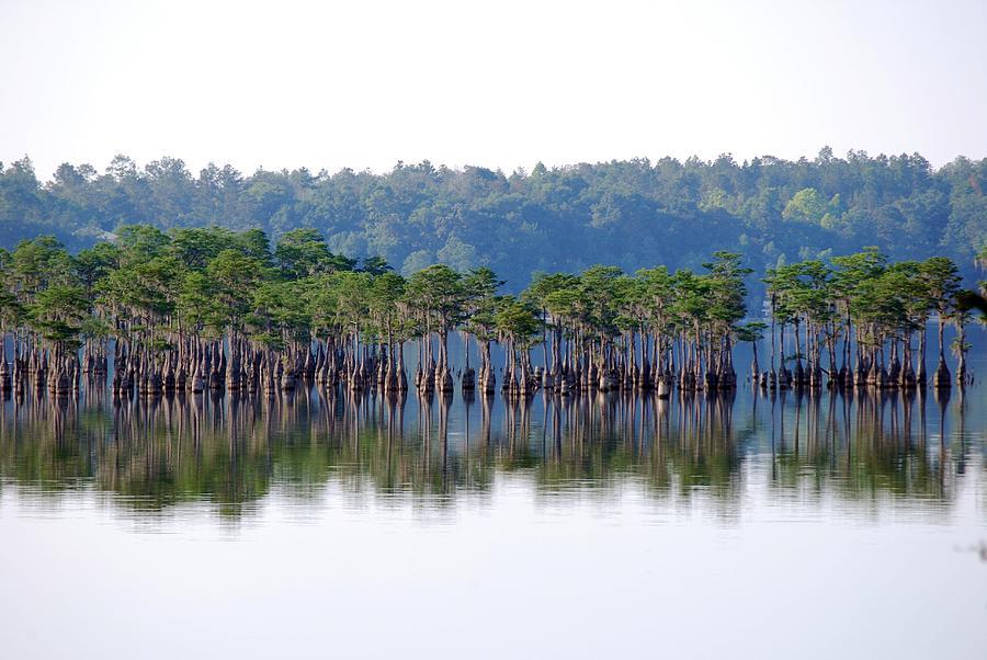 Florida Panhandle Photograph - Compass Lake by Peter  McIntosh