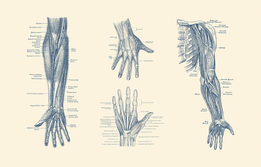 Complete Arm And Hand Diagram