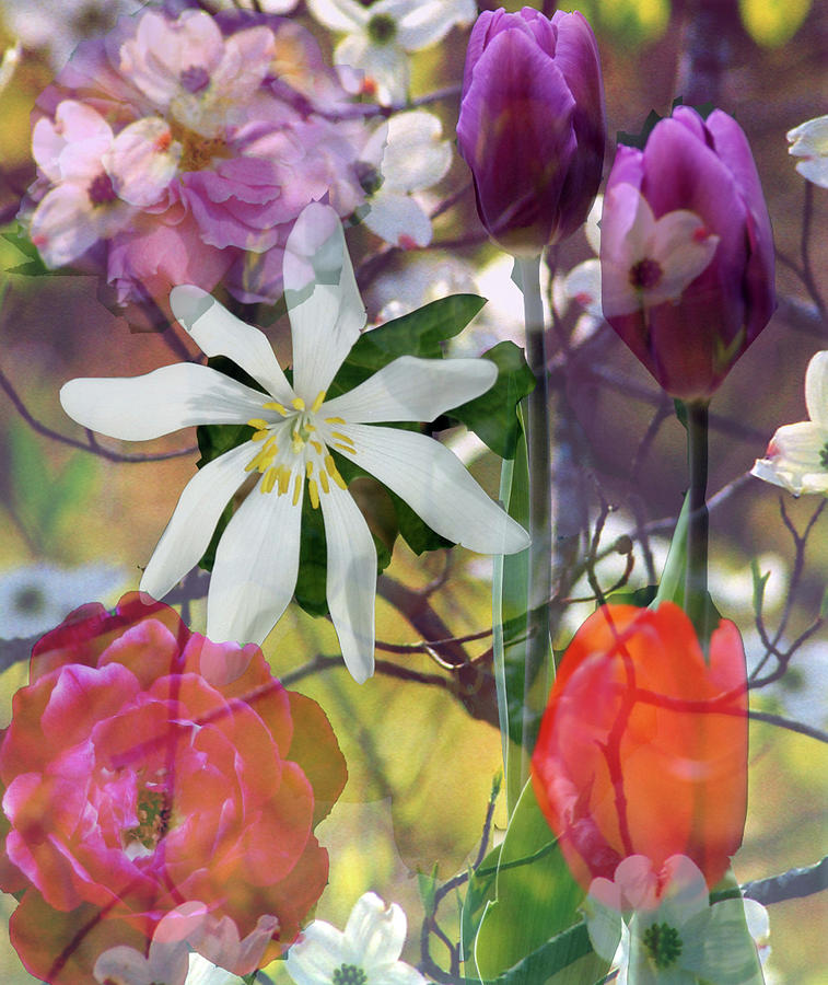 Composit of Flowers by Shirley Roberson