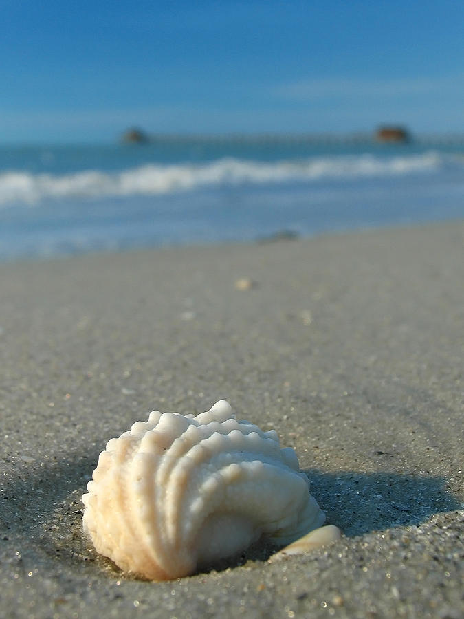 Beach Photograph - Conch Shell by Juergen Roth