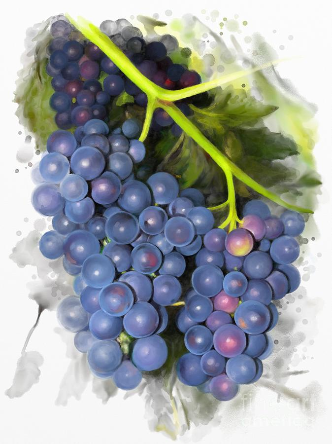 Concord grape by Ivana Westin