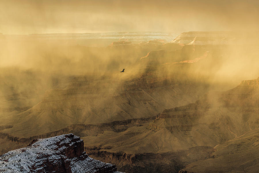 Arizona Photograph - Condor In A Storm by Mike Herdering