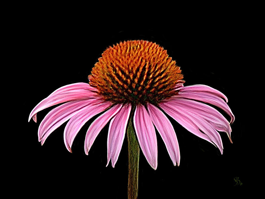 Cone Flower - Rudbeckia by Sue  Brehant
