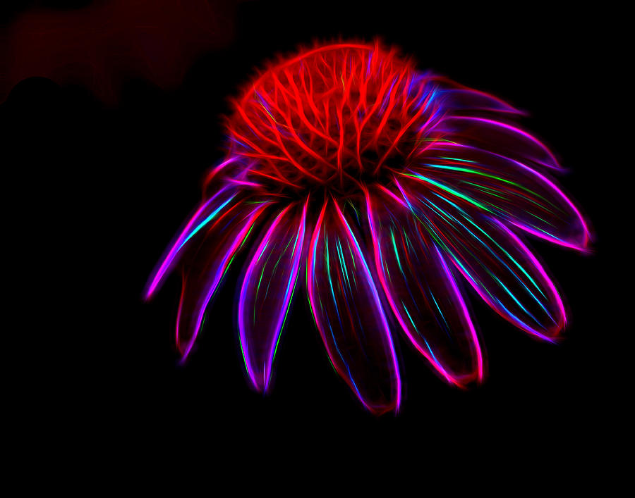 Cone Flower - abstract by Don Keisling