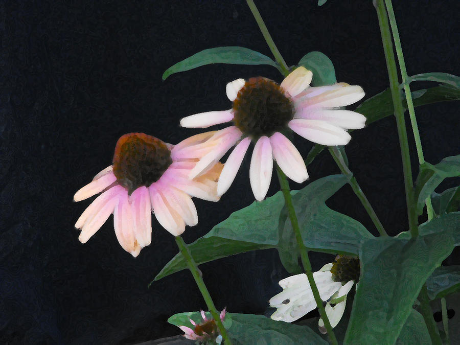 Coneflower Photograph - Coneflowers by Catherine Sprague