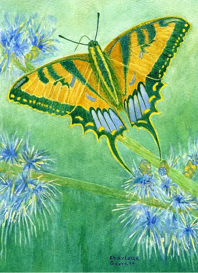 Confidence Butterfly by Charlotte Garrett