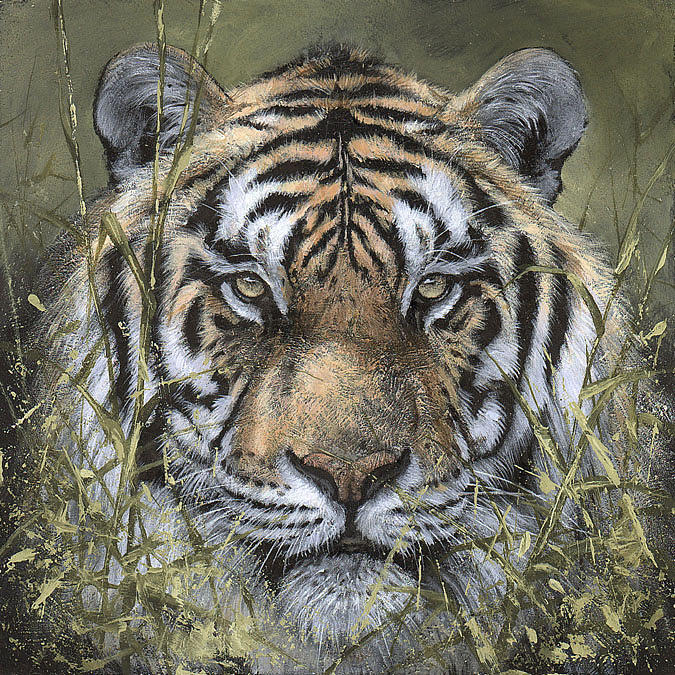 Tiger Painting - Confrontation by David Lyons