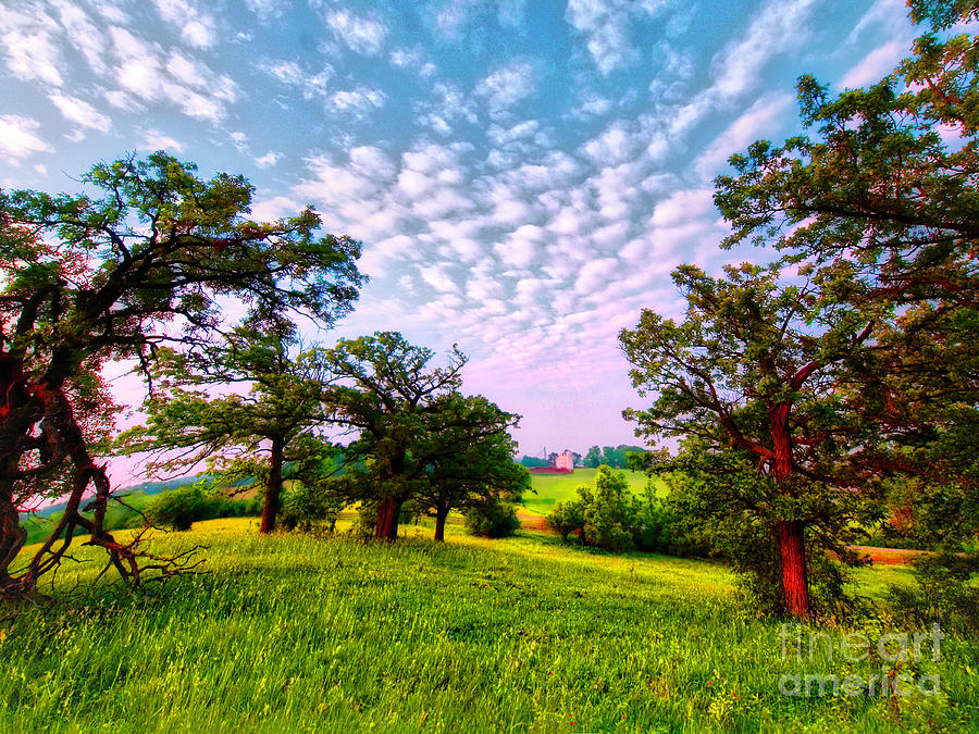 Illinois Farms Photograph - Conley Road Meadow, Oaks, Barn, Spring  by Tom Jelen