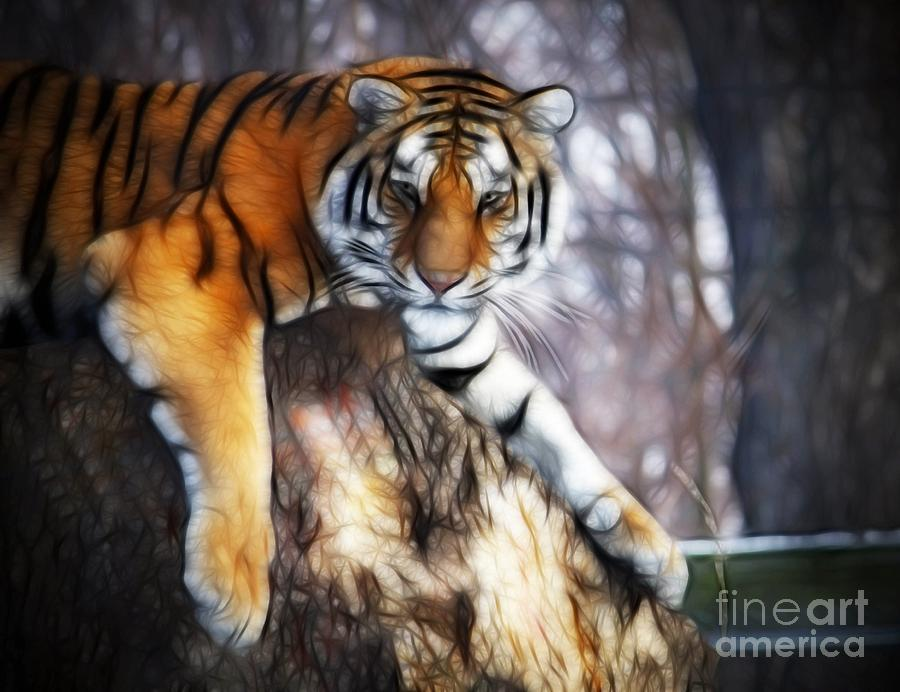 Tiger Photograph - Connection by Shelly Brock