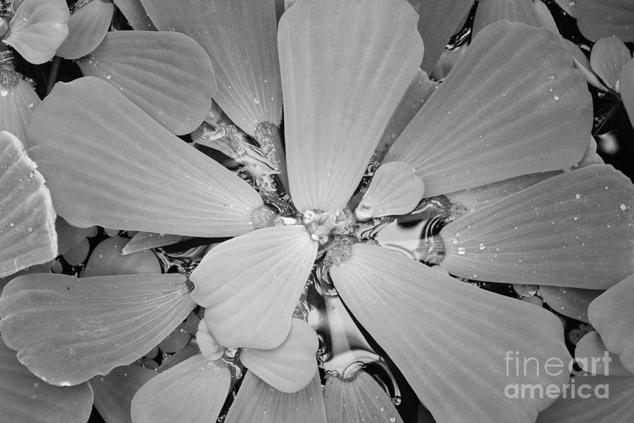 Nature Photograph - Conservatory Nature In Black And White 1 by Carol Groenen