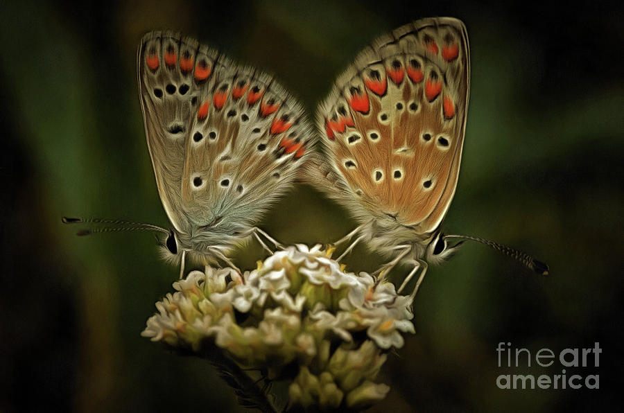 Abstract Photograph - Contact - Detail Of The Butterflies by Michal Boubin