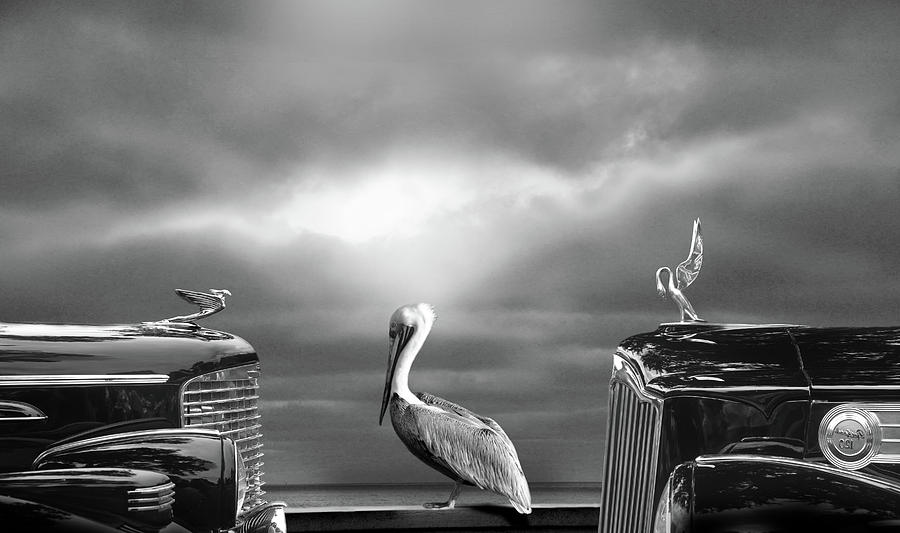 Automobile Digital Art - Contemplating The Pelican by Larry Butterworth