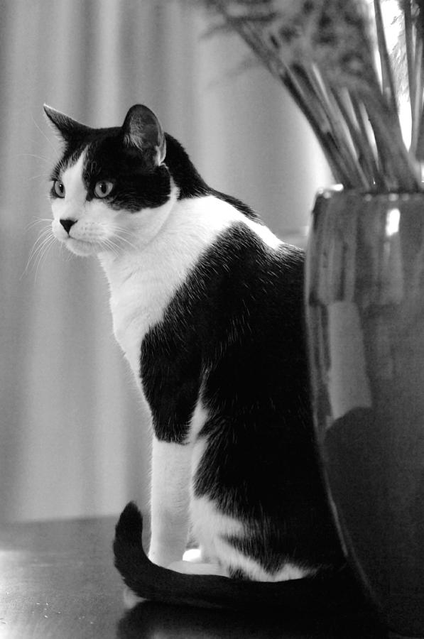 Black And White Photograph - Contemplative Cat Black And White by Jill Reger
