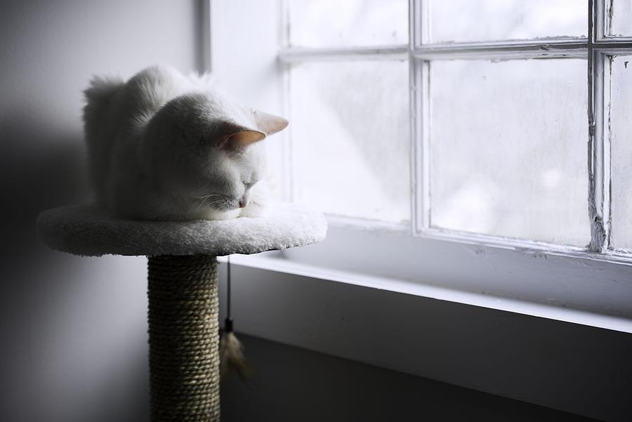 Cat Photograph - Content Cat by Kelly E Schultz