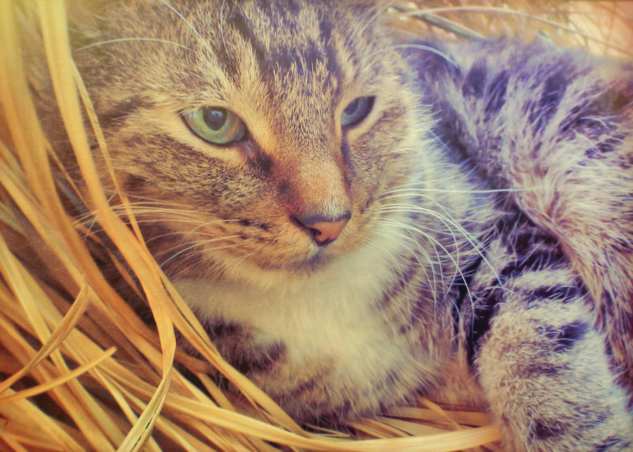 Cat Photograph - Content by JAMART Photography