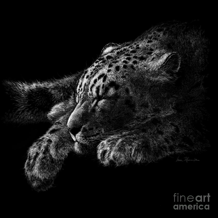 Snow Leopard Drawing - Content by Laurie Musser