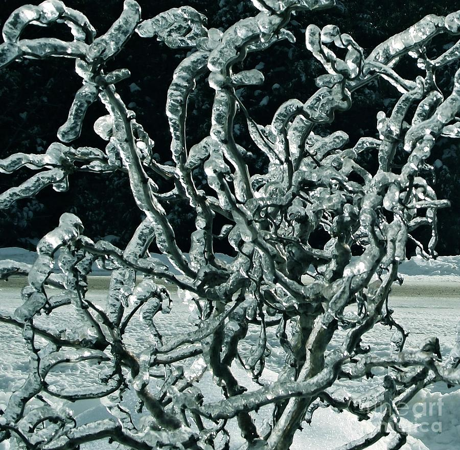 Ice Photograph - Contorted by David and Lynn Keller