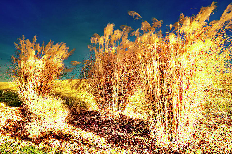 Grass Photograph - Contrasts by Michael Putnam