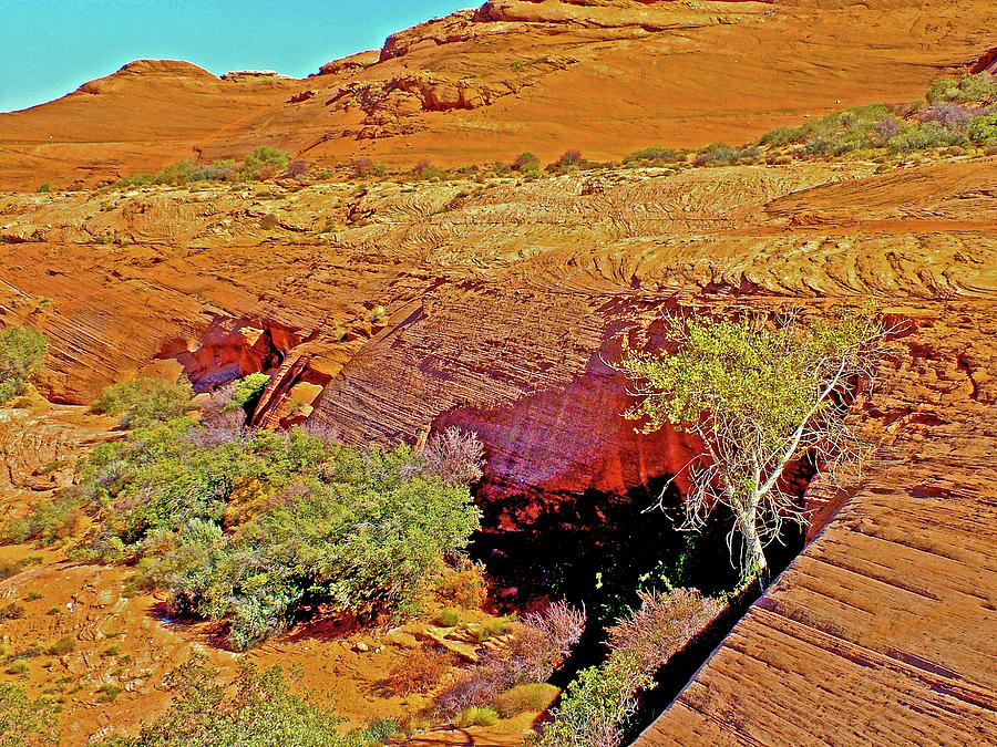 Cool Alcove At End Of Hanging Gardens Trail In Glen Canyon National