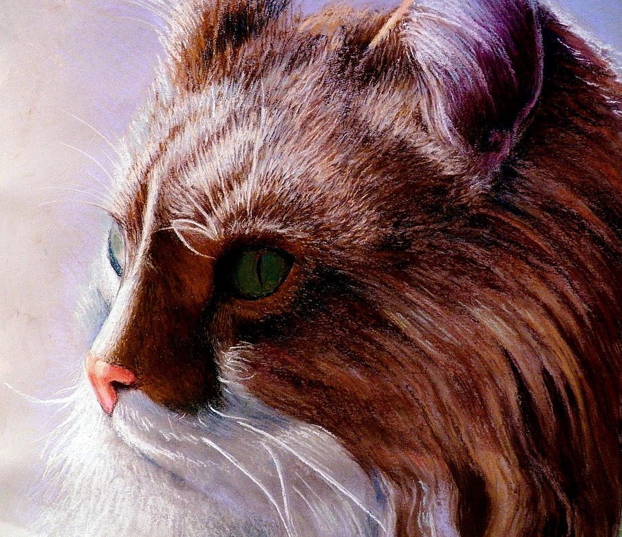 Maine Coon Cat Painting by John Gabb