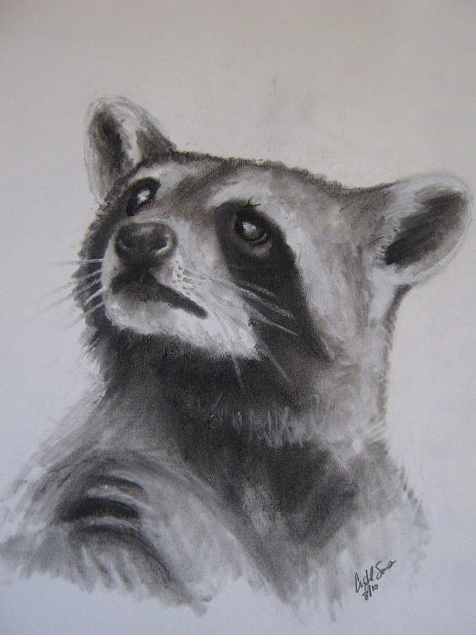 Coon Drawing by Crystal Sons