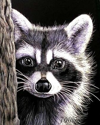 Animals Drawing - Coon by Janet Moss