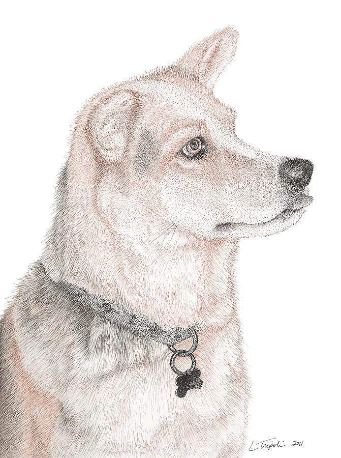 Pet Drawing - Cooper by Lawrence Tripoli