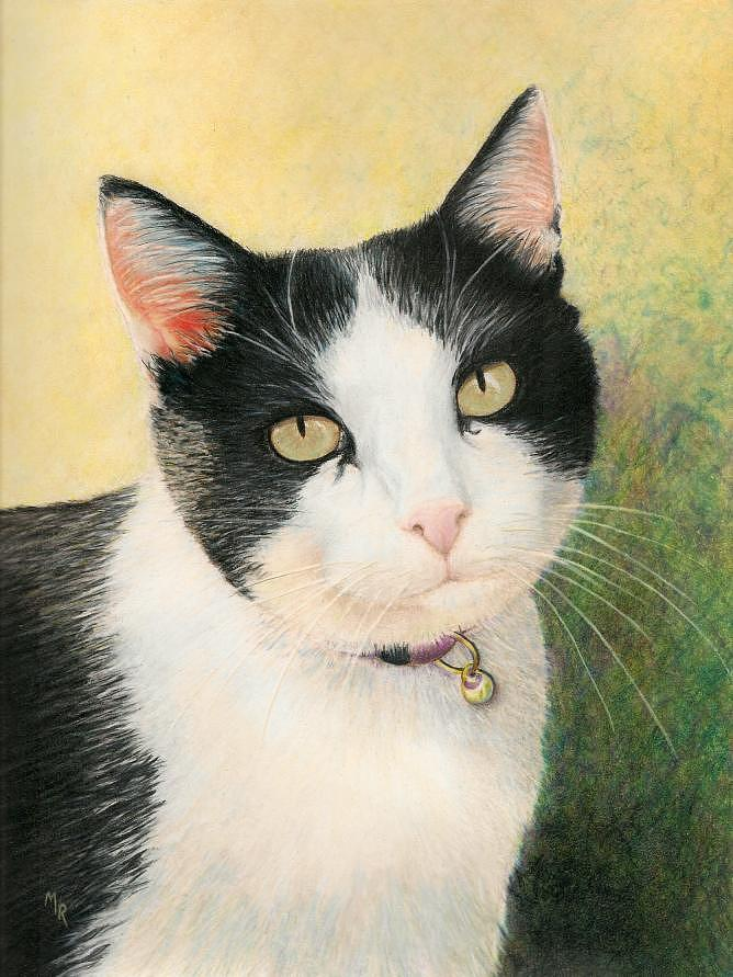 Cat Drawing - Cooper The Most Handsome by Mary Rogers