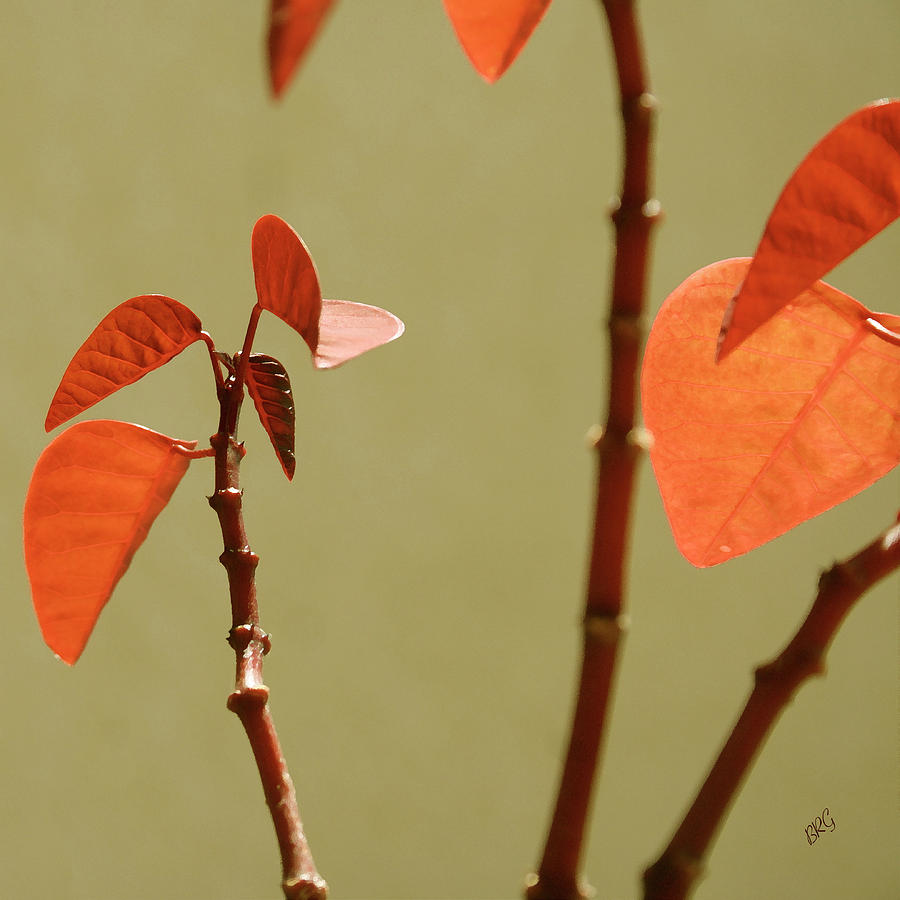 Red Photograph - Copper Plant 2 by Ben and Raisa Gertsberg