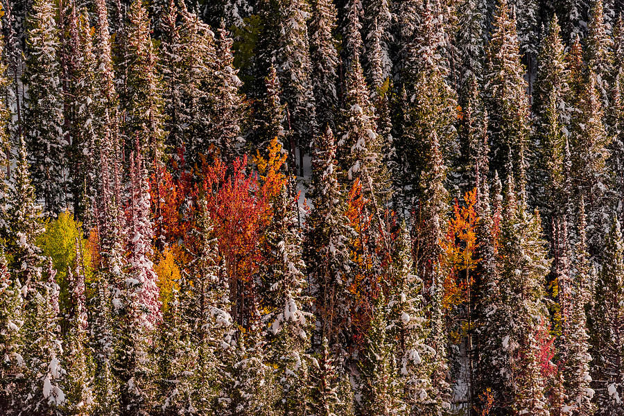 Copse of Color  by Dave Koch