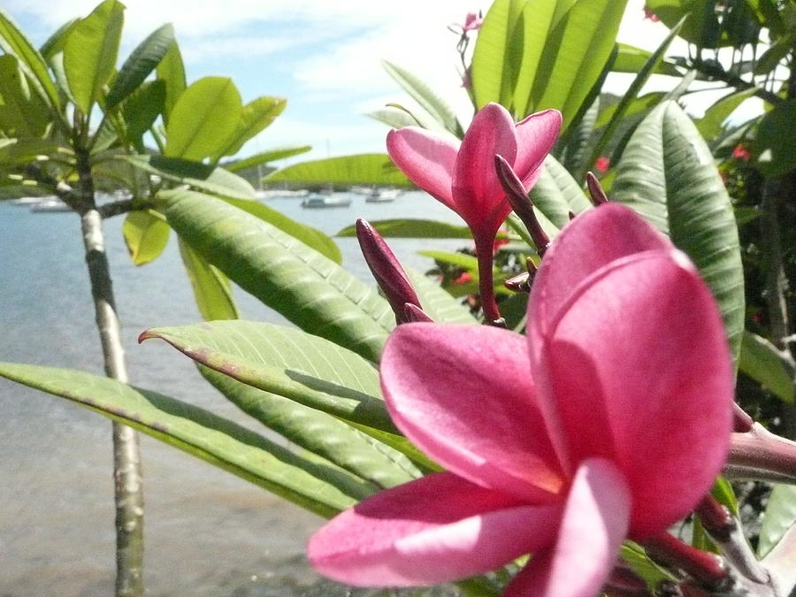 Flowers Photograph - Coral Bay 2 by Robert aka Bobby Ray Howle