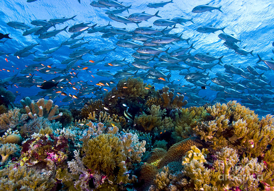 Coral Reef Photograph by Carlos Villoch