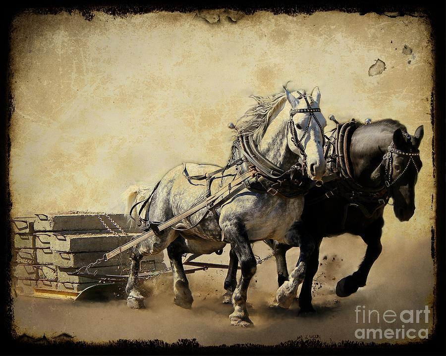 Horse Photograph - Core-two-duo by Davandra Cribbie
