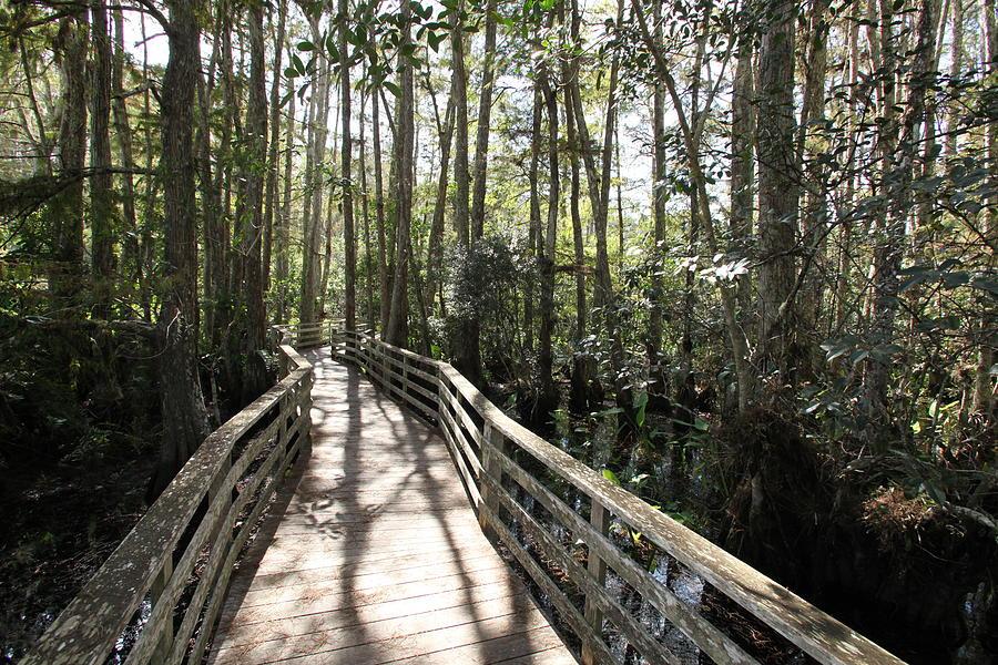 Corkscrew Swamp 697 by Michael Fryd