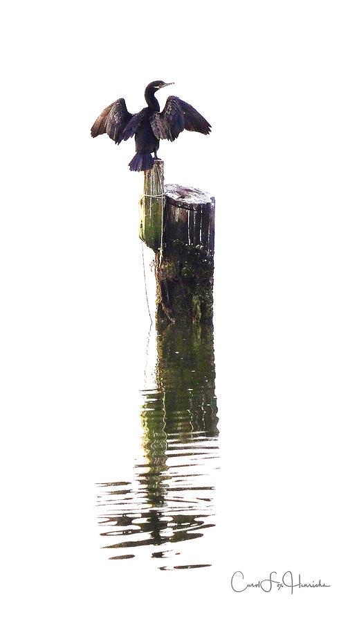 Birds Digital Art - Cormorant Sunning by Carol Fox Henrichs