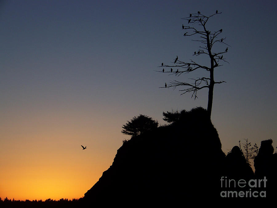 Cormorant Tree by Julie Rauscher