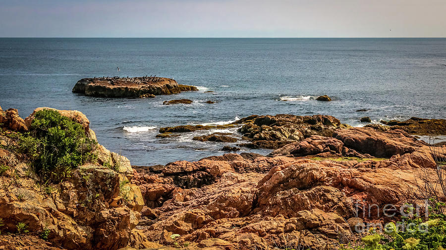 New England Photograph - Cormorants And Seagulls Resting by Claudia M Photography