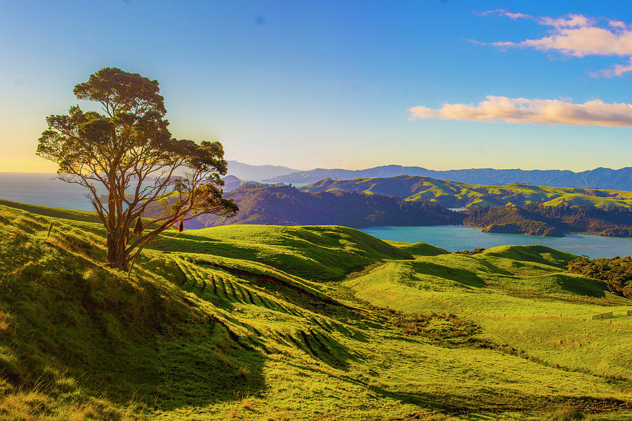 New Zealand Photograph - Cormundel Peninsula by Jeff Pfaller