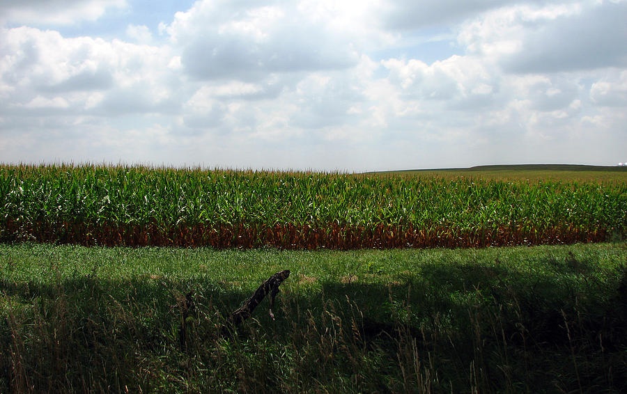 Corn Photograph - Corn And Clouds by Joanne Coyle