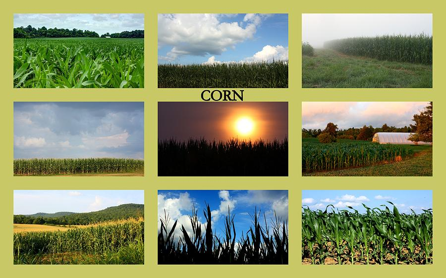 Corn Collage by Angela Comperry