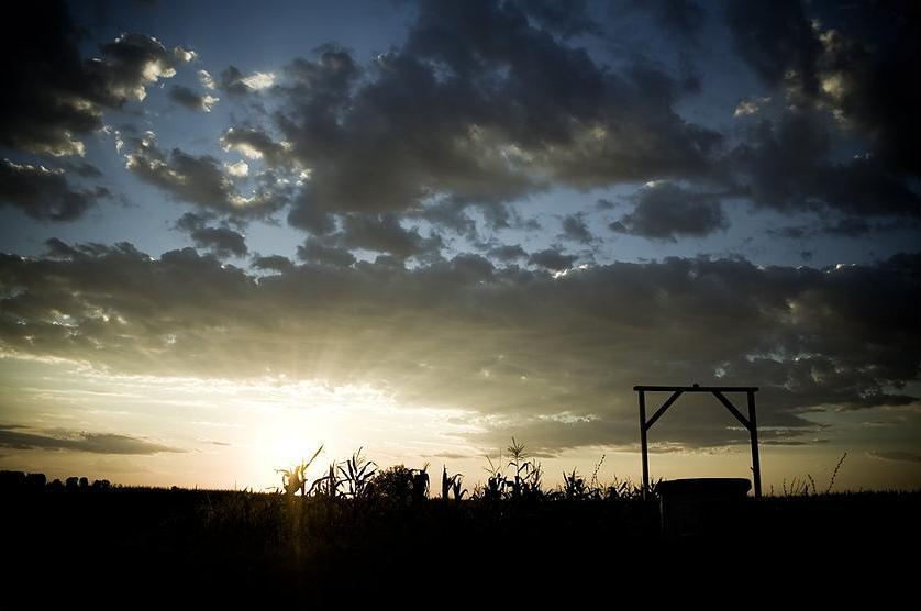 Corn Field Photograph by Andrei Constantin Visan Preda