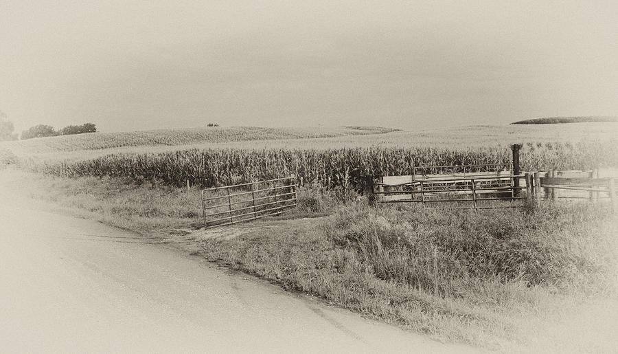 Corn Photograph - Corn Gate Rusty by Wilma  Birdwell